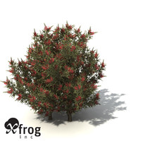 common net bush 3d model