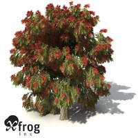 xfrogplants weeping bottlebrush tree shrub 3d max