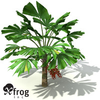 3d xfrogplants queensland fan palm