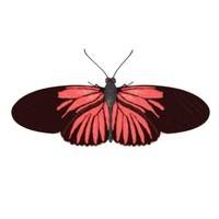 butterfly red helicon 3d model