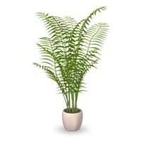 3d chrysalidocarpus