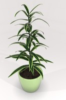 dracena dracaena variegata 3d model