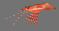 pacificprawn games 3d model