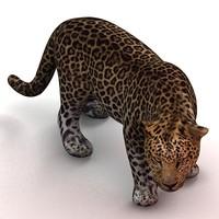 cat feline 3d max