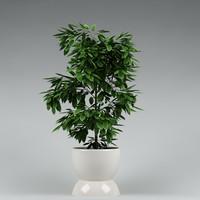 plant_32