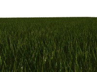 Grass Blades - Polygonal