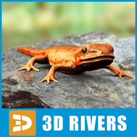 red-spotted newt lizards 3d model