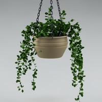 plant_29_hang plant