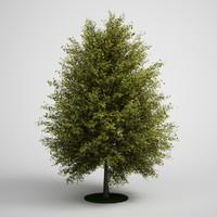 CGAXIS tree 13