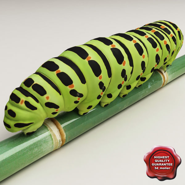Papilio_machaon_caterpillar_00.jpg