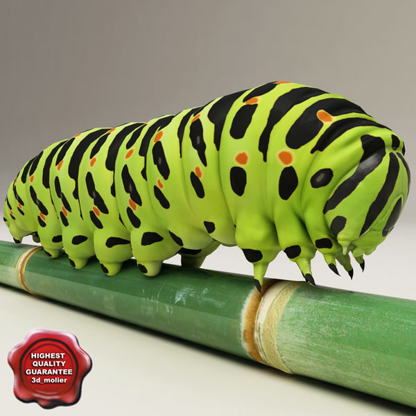 Papilio_machaon_caterpillar_V2_00.jpg