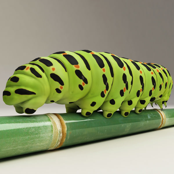 papilio machaon v2 3d model - Papilio machaon V2... by 3d_molier