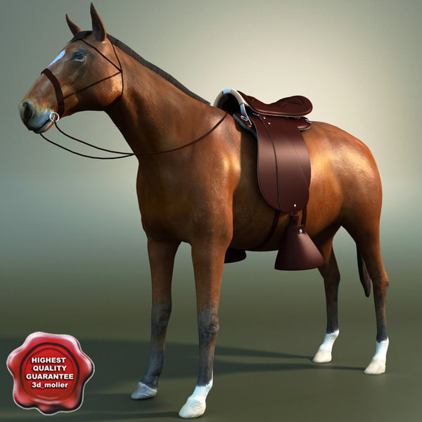 Saddle_Horse_00.jpg