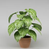 plant_28