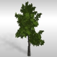 hi-poly oak tree 3d model