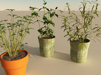 kitchen herbs 3d model