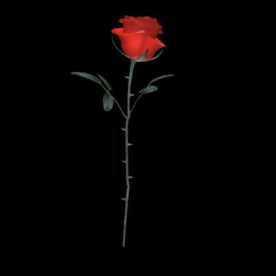 red rose 2010