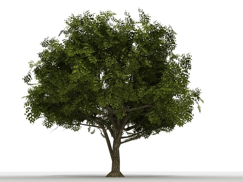 tree_001.jpg