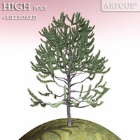 evergreen tree 3d model