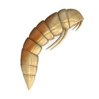worm 3d model