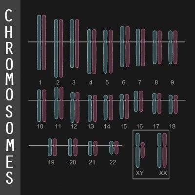 Chromosome Diagram