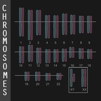 Chromosome Diagram