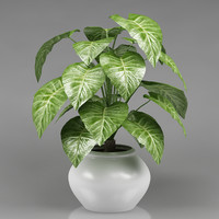 plant_31