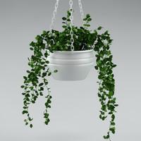 plant_30_hang plant