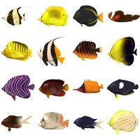 tropical fishes 3d model