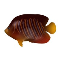 tropical fish 3d model