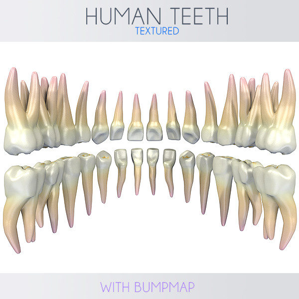 human teeth 3d 3ds
