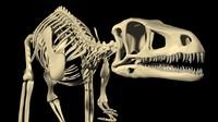 Dinosaur Eoraptor Lunensis (the first dinosaur