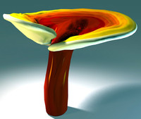 ganoderma lucidum 3d model