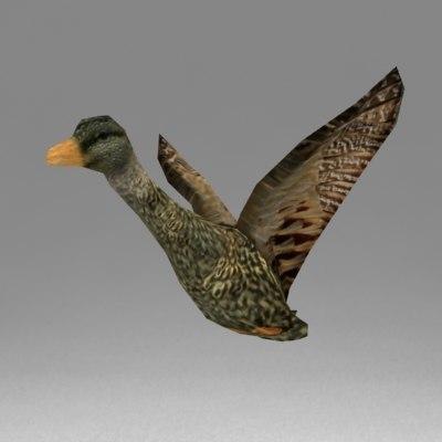 Duck1_v1.jpg