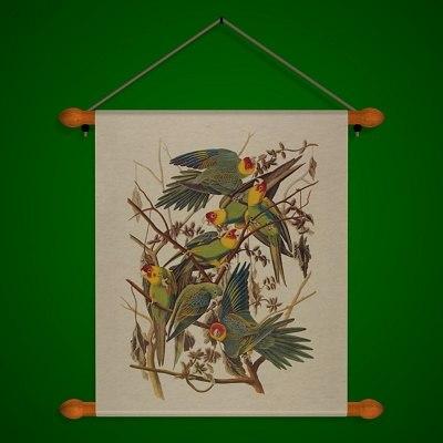 Parrots_A.jpg