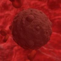 hantavirus virus 3d model