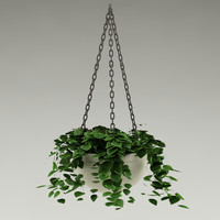 plant_33_hang plant