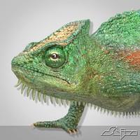 chameleon lizard 4 3d model