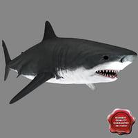 Shark Static