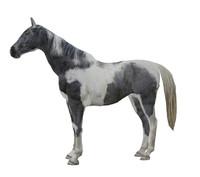 PhotoRealistic Horse C
