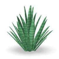 desert plant 3d model