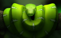 3d model snake green