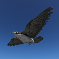 3d model peregrine falcon