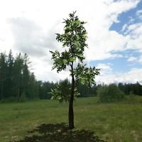 3ds hi-poly tree