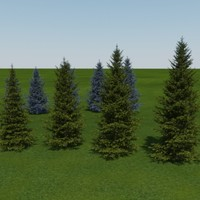 blue_and_white_spruce