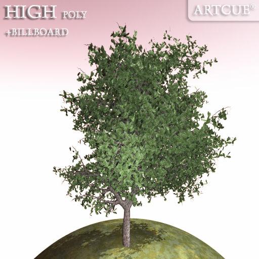 tree_036_main.jpg
