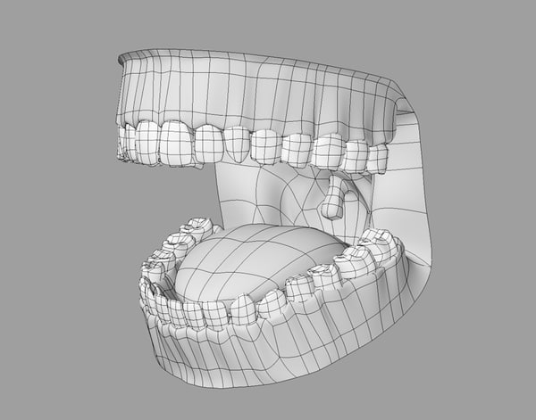 3d dental anatomy model - Dental Anatomy... by SpinQuad1976