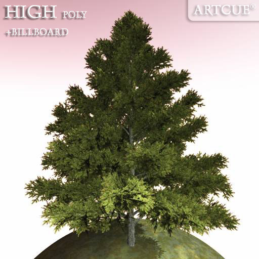 tree 033 spruce