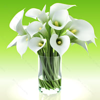 3d realistic flowers calla lily