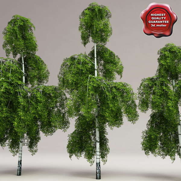 Low-Poly_Birch_Trees_Collection_00.jpg